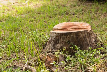How to Kill the Roots & Stump of a Tree Without Digging It Up