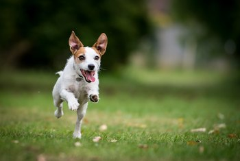 Which Pest Control for a Yard Is Safe for Dogs