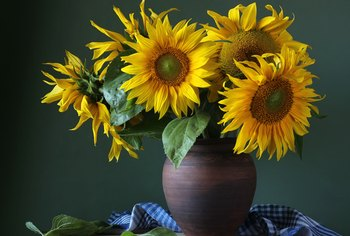 How to Cut Sunflowers to Put in a Vase