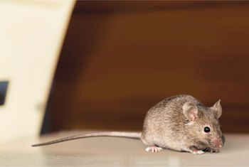 How to Get Rid of Mice in Heating Ducts