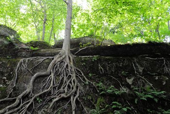 How To Landscape Around Tree Trunks Roots Home Guides