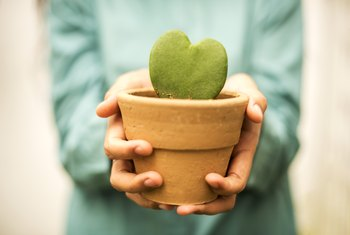 How to Replant a Potted Cactus
