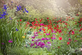 Do Annuals or Perennials Come Back Every Year?