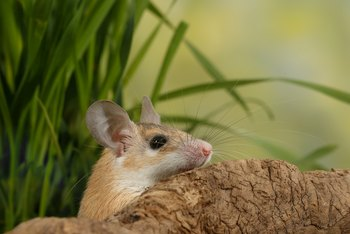 How to Keep Rats Out of Citrus Trees
