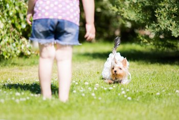 How to Get Rid of Roundworms in the Yard