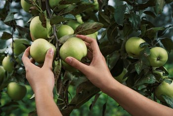 Hydrogen Peroxide to Treat Fungus on Fruit Trees