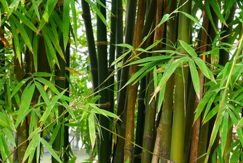 The Best Weed Killer for Bamboo