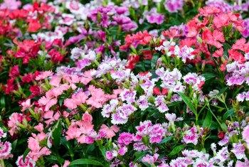 Various Types Of Dog Safe Shade Perennials For Your Garden Home
