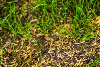 How to Use a Seed Germination Blanket Over Existing Grass