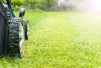Does Cutting the Grass Promote Growth?