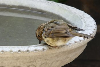 How to Seal a Concrete Birdbath