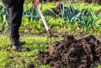 How to Repair a Lawn From Too Much Fertilizer