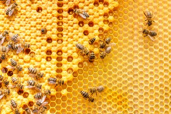 Is Bee Pollen Safe for Nursing Moms?