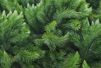 How to Get Pine Tree Sap Out of Fabric