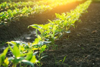 Difference Between Garden Soil and Top Soil