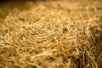 Does Grass Seed Need to Be Covered With Hay?