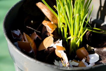 What Plants Would Benefit From Crushed Eggshells?