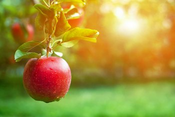 How Long for Apple Trees to Mature & Produce Fruit?