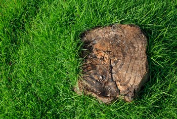 Can You Preserve a Tree Stump?
