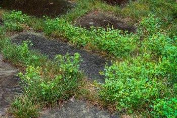 When To Put Crabgrass Preventer Down Home Guides Sf Gate