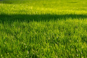 How to Aerate Your Lawn Without Machines