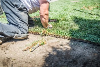 How to Fertilize Newly Laid Sod