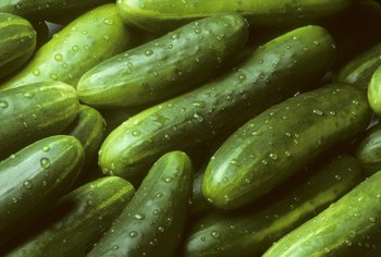 How Long Do Cucumber Plants Live?