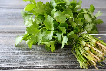 What Does Cilantro Do for the Body?