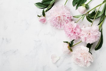 When to Prune Peonies?
