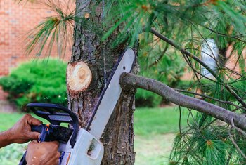 How to Seal a Cut Limb on a Tree