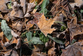 How to Make Dead Leaves Decompose Faster