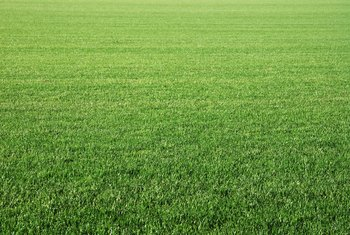 How Long After Grass Starts Growing Can You Cut It?