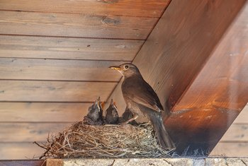 How To Keep Birds From Nesting On Porches Home Guides