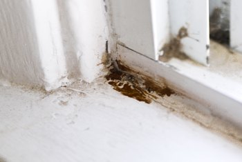 How To Get Rid Of Mold On Wood Surfaces