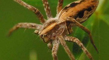 How to Identify Spiders in Connecticut