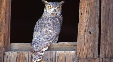 How to Recognize Animal Eyes at Night