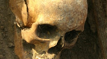 Aztec whistles of death are intended to look like human skulls.