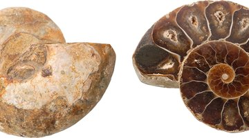What Is Fossil Correlation?