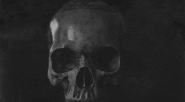 Types of Human Skull Shapes