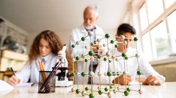 What Are the Levels of Organization in Biology?