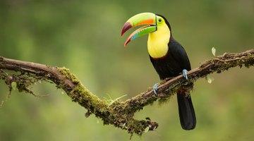 Rain Forest Animals for Kids