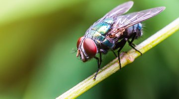 The Importance of Flies