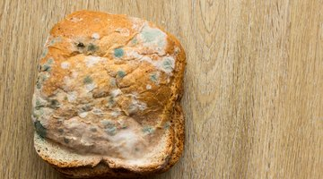 Different Kinds of Bread Mold