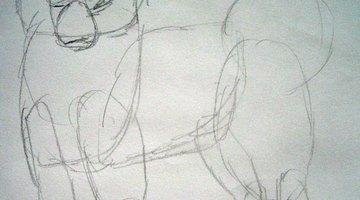 Sketch the Samoyed's facial shapes.