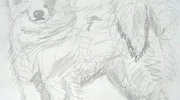 Draw the fur on the Samoyed.