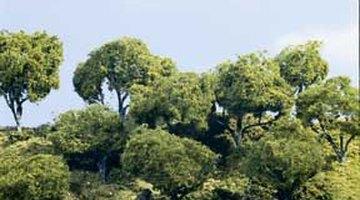 Woodland Scenics forest kit