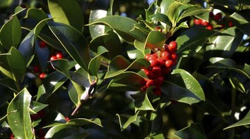 Carry a holly branch as Dickens described.