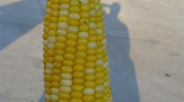 Corn (Photo by Kevinhttp://www.flickr.com/photos/kb35/2616792489/)