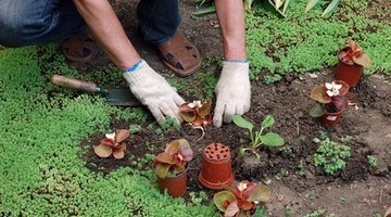Planting by hand