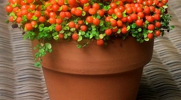 Revitalize terra cotta clay pots for a lamp shade.